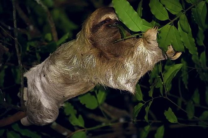 Night walk wildlife observation and Reptile watching in Monteverde from San José