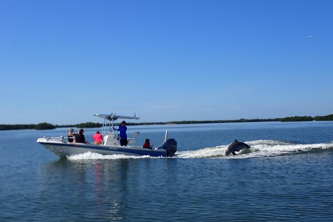 Dolphin Tours - Fort Myers Beach / Estero Bay photo 12
