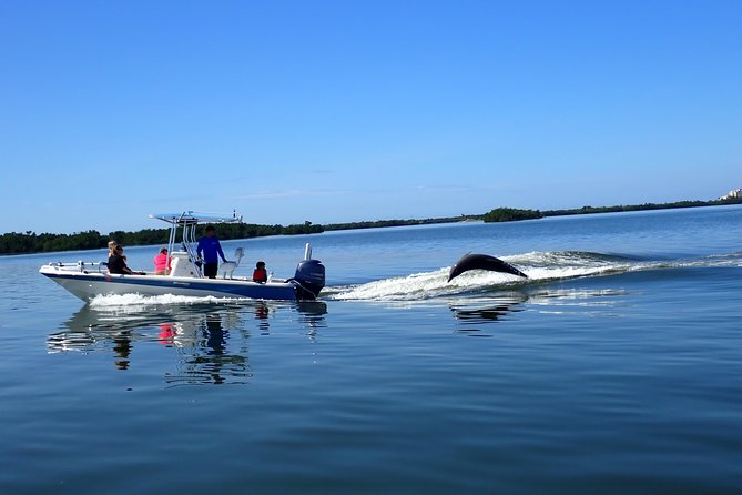 Dolphin Tours - Fort Myers Beach / Estero Bay photo 3