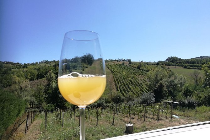 Organic & Vegan wine tasting at Illica Winery close to Piacenza & Parma photo 8