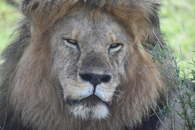 3 days in middle of Serengeti