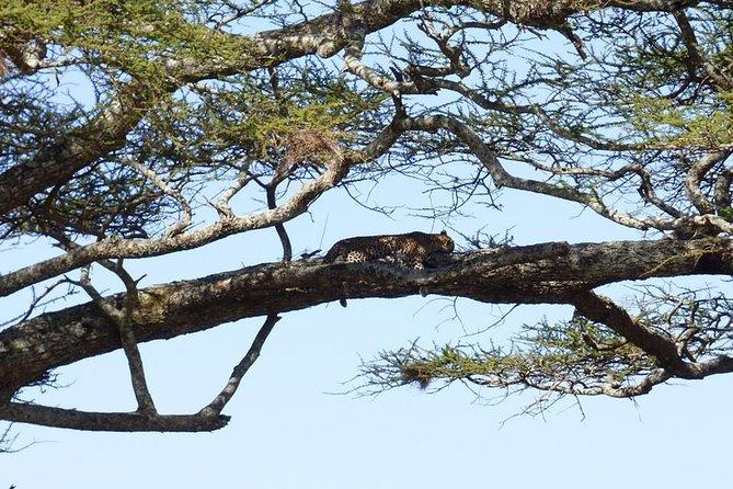3 Days Safari (Lake Manyara / Ngorogoro Crater / Tarangire National Park)