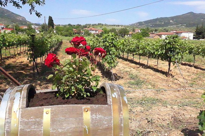 Wine Routes Private Tour (Nemea - Argos) from Athens or Nafplion (10 hours)