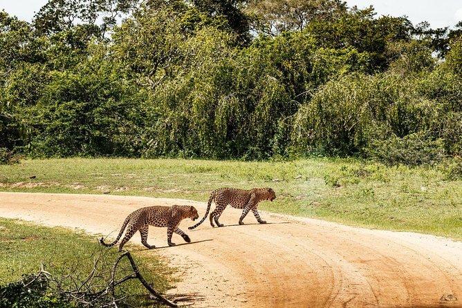 Yala National Park Leopard Tracking Private Safari