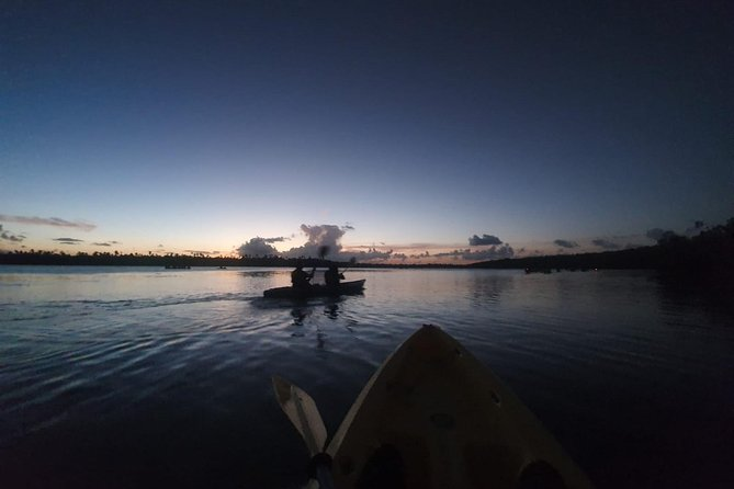 Rainforest Nature Walk & Bio Bay Night Kayaking Combo with Transportation photo 5
