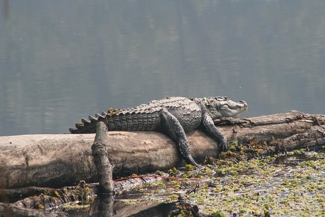 Jungle Towernight Stay In Chitwan National Park ,nepal-2 Nights 3 Days Package photo 9