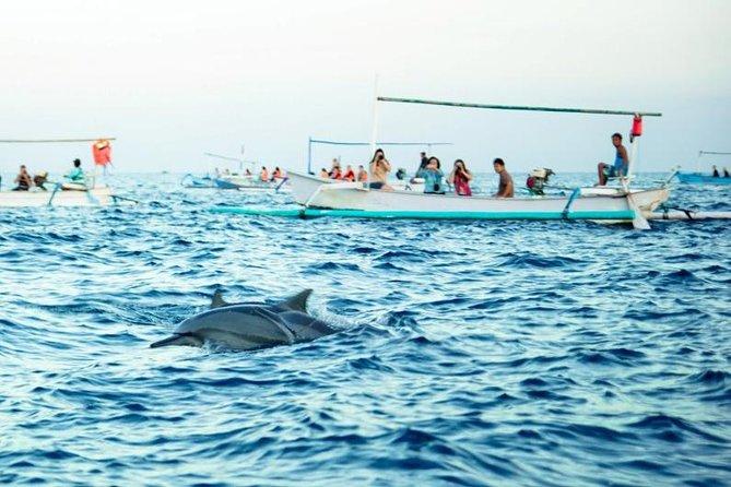 North Bali Dolphin Tour - WaterFall - UlunDanu Temple - Free WiFi