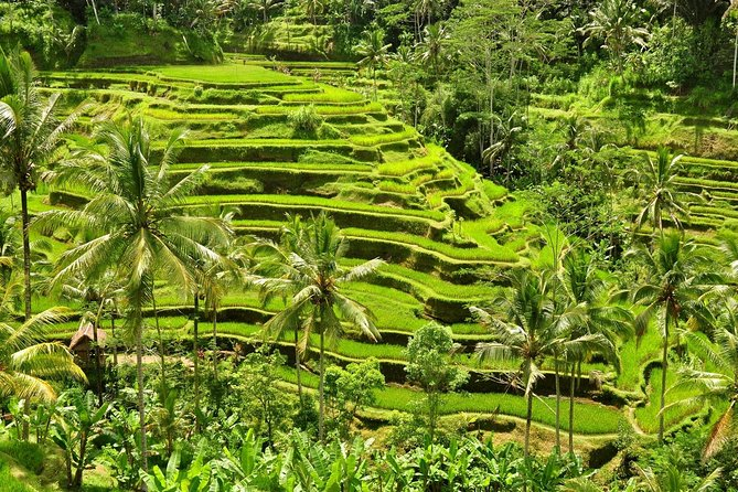 All In : Full Day Art and Culture - Ubud - Kintamani Tour - Free WiFi photo 3