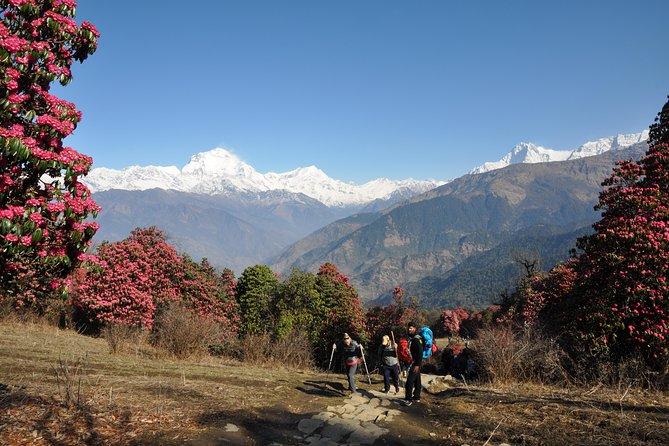 Kathmandu, Bhaktapur & Pokhara tour, Annapurna Region Trekking -14 days