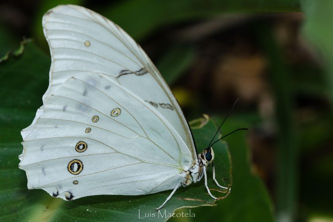 Openwork butterfly garden