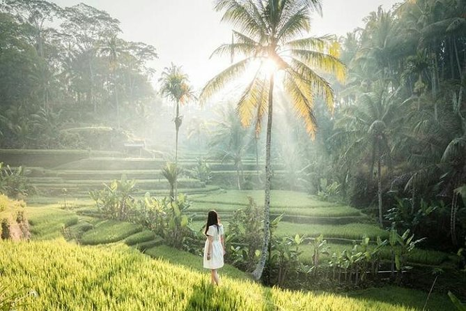 Ubud surrounding private tour - monkey forest - waterfall - free wifi