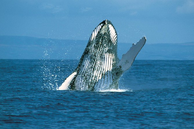 2 Hour Whale Watch