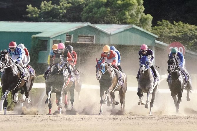 A tour to enjoy Japanese official gambling (horse racing, bicycle racing, pachinko)
