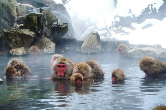 "Snow Monkey in ""Jigokudani Yaen-koen"" & Obuse Town"