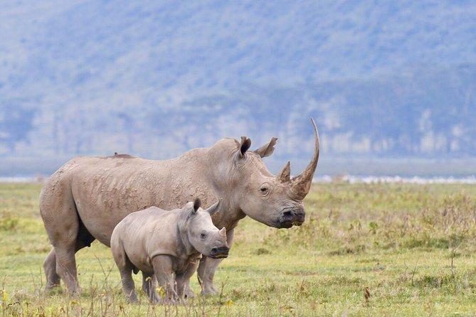 4 Days Lake Nakuru & Maasai Mara Safari