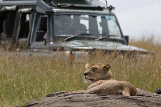 4 Days Lake Nakuru & Maasai Mara Safari photo 5