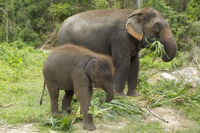 Visit Chiang Mai Home of Elephant Natural Habitat with Karen Hill Tribe