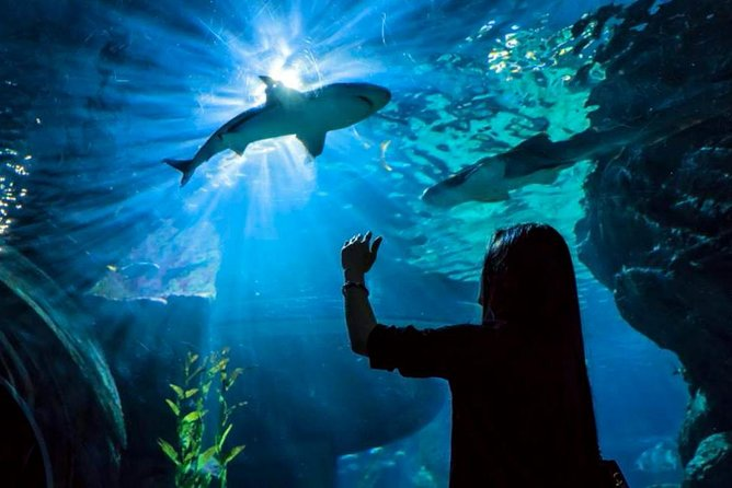 Skip the Line: Sea Life Bangkok Ocean World Ticket - Fun Day for Family