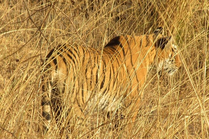 Ranthambore Same Day Experience
