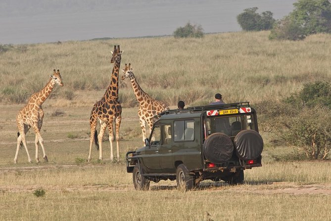6 Days Murchison and Queen Elizabeth National Parks