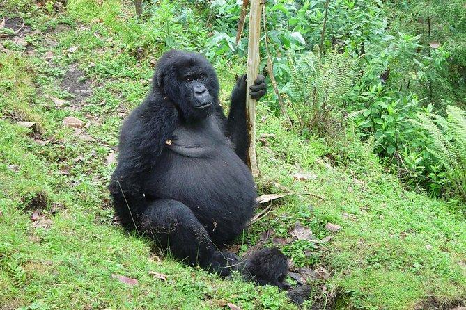 3 days Gorilla trekking from Kampala