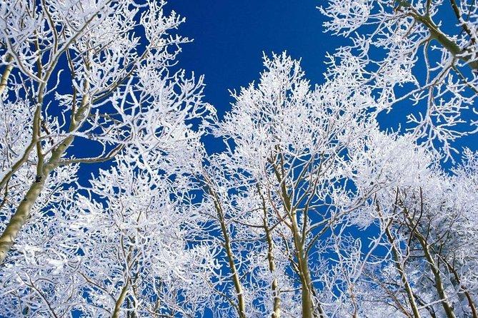 Winter Ride to Sabaduri Forest
