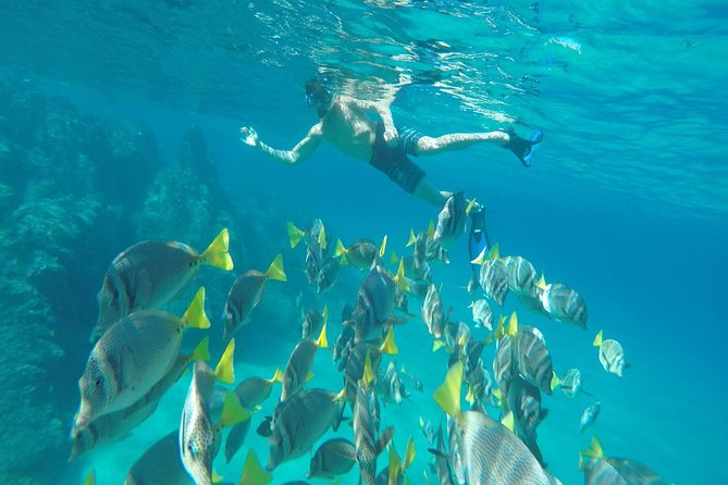 Land's End & Snorkel Tour in a Glass Bottom Boat (VisitA Cabo)
