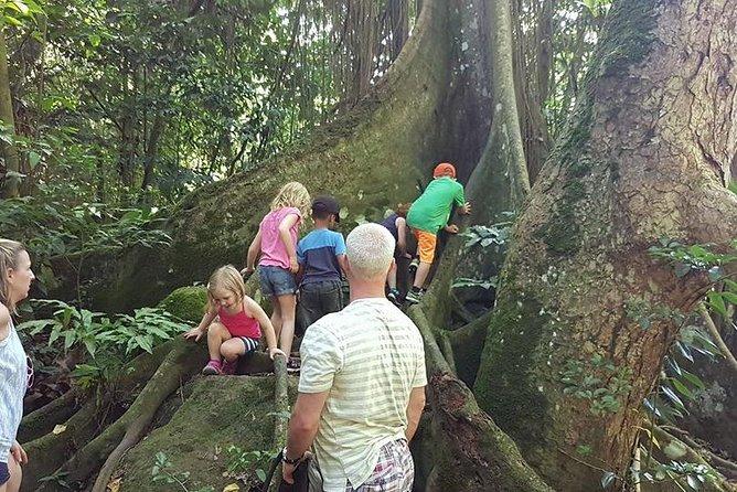 Tropical Rain Forest Explorer