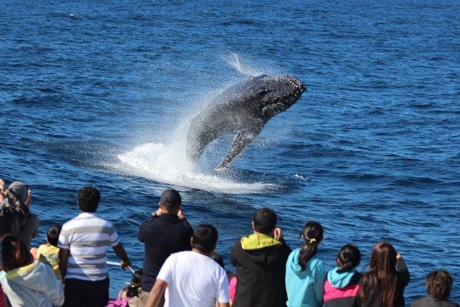 Tangalooma Island Resort Whale Watching Day Cruise with Dolphin Feeding