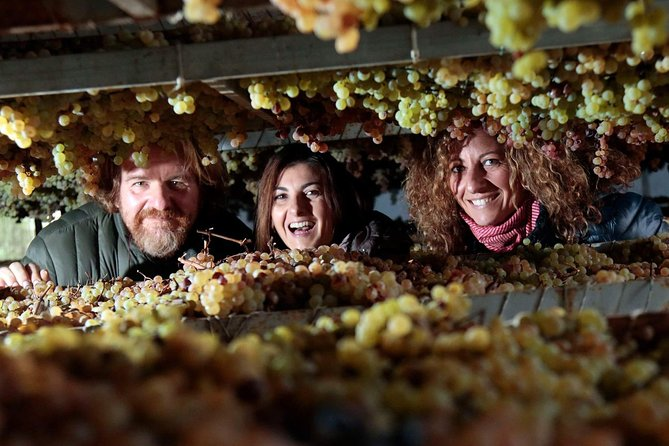 Piazzano wine experience: discover a family business winery close to Florence