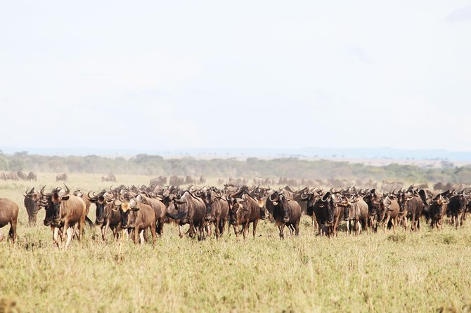 9-Day Serengeti Migration Footsteps Tanzania Safari