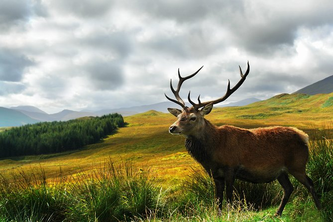 3 Day / 2 Night Scottish Highland Experience from Edinburgh photo 6
