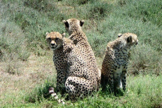 5 Day: Best Of Tanzania Mid Range Safari (hotel pickup and meals included)