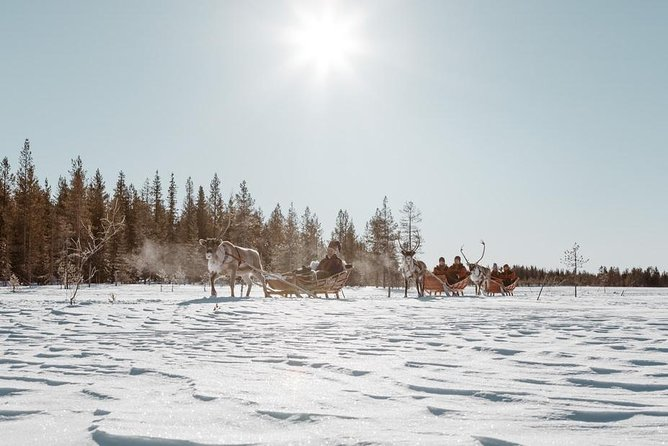 Snowmobile Safari to Reindeer Farm from Luosto