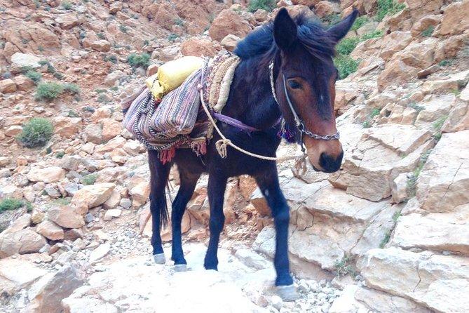 1 night nomadic hike in Todra Gorge - Aventures Verticales Maroc