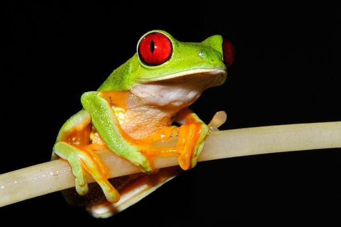 Frog Watching Night Walk