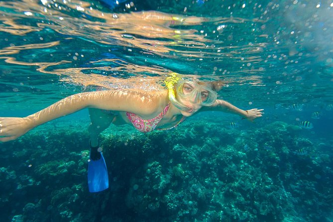 Beach Hopper Snorkeling Tour in Los Cabos photo 3