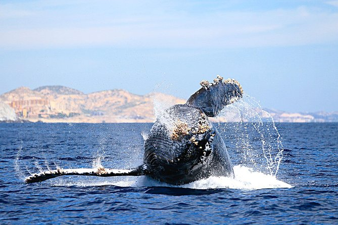 Whale Watching Tour in Cabo San Lucas
