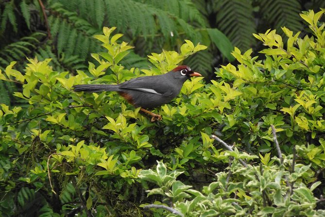 Fraser Hill Birding Tour (Private) from Kuala Lumpur
