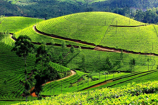 Short Break Kerala - 4 Days