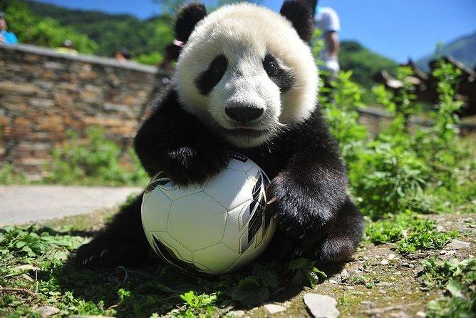 1 Day Wolong Panda Nature Reserve Tour