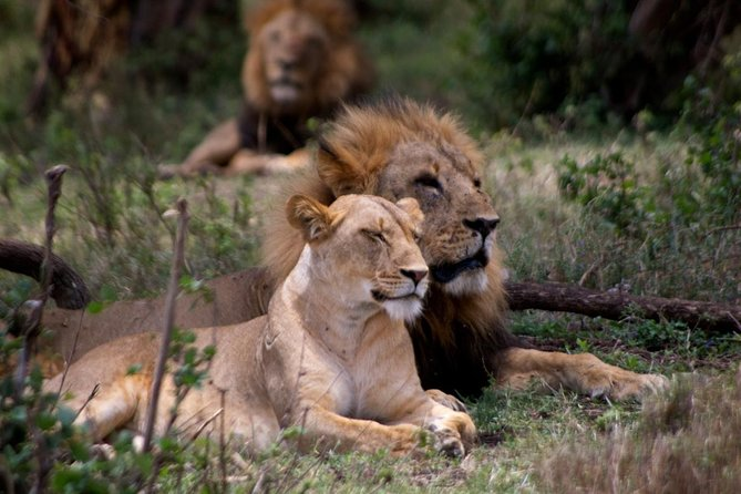 2 Days Akagera National Park Game Drive