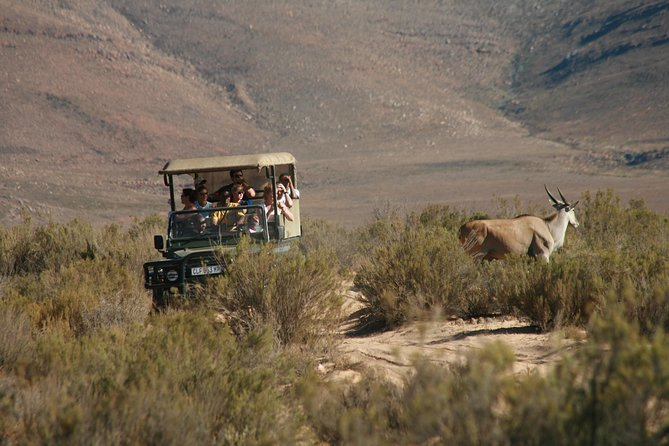 Aquila Safari Private Game Reserve Sunset Game Drive photo 7