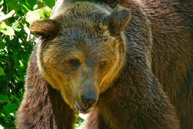 Private Bears & Castles in Transylvania Day Trip