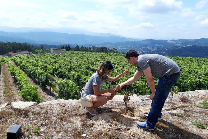 Wine & Vine Planting - Quinta de Santa Cristina Wine Estate