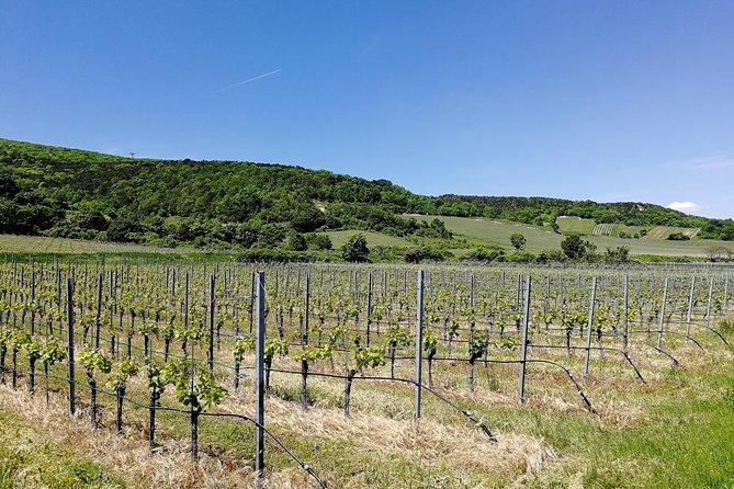 Private Vienna Woods Wine Tour