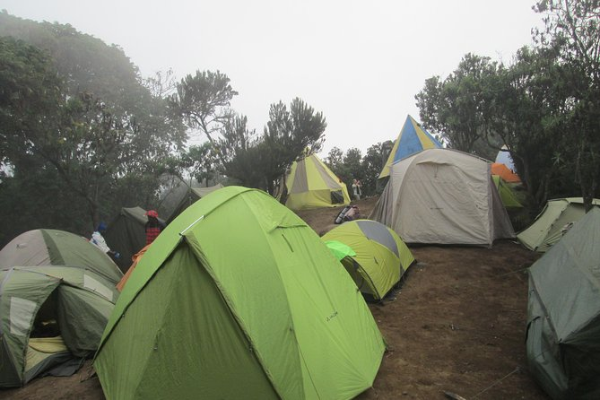 1 Day Kilimanjaro Hike Machame Route photo 3