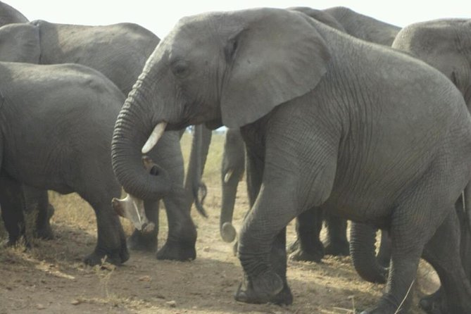 1 Day Tarangire National Park Day Tours