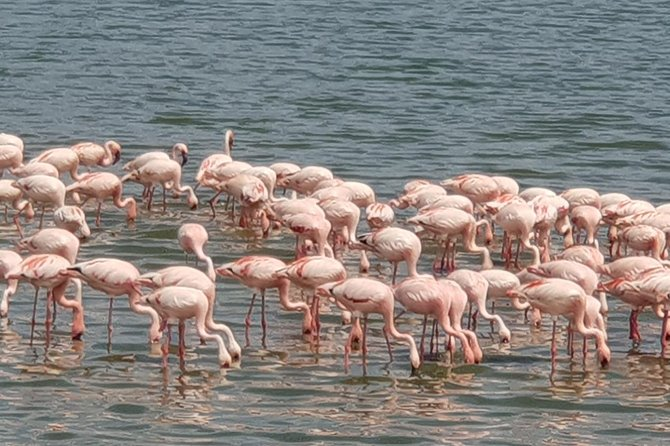 1 Day Lake Manyara Day Trip