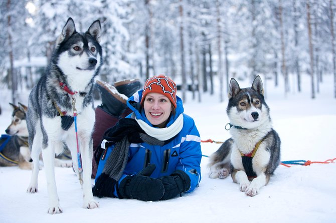 Husky Safari from Rovaniemi Including a Husky Sled Ride